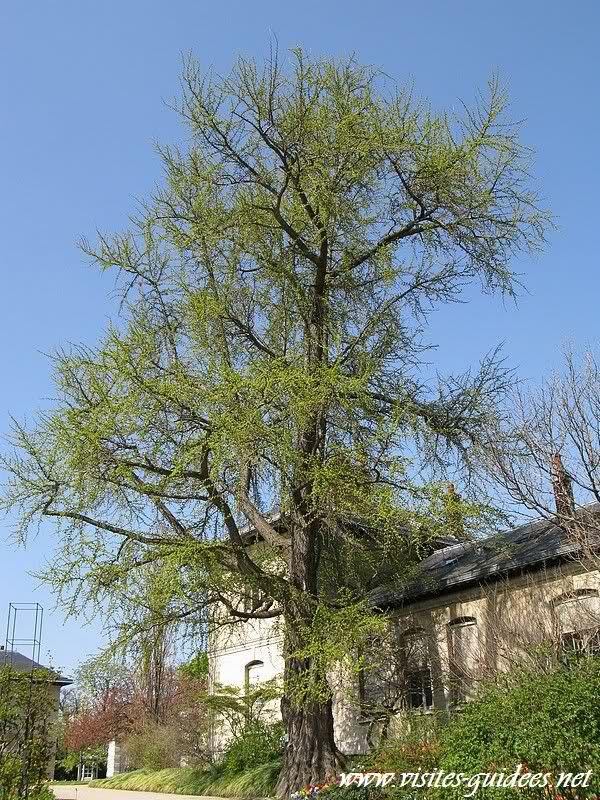 Jardin des Serres d'Auteuil Paris