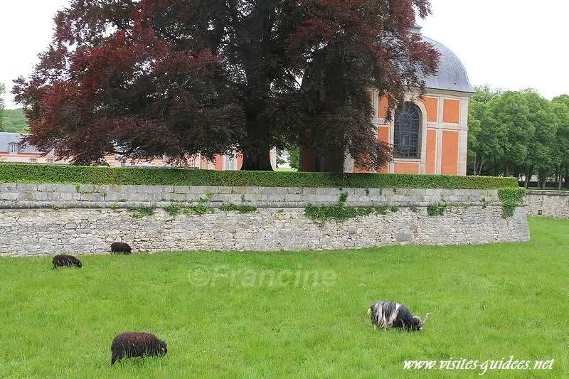 Mouton Landes de Bretagne Chamarande