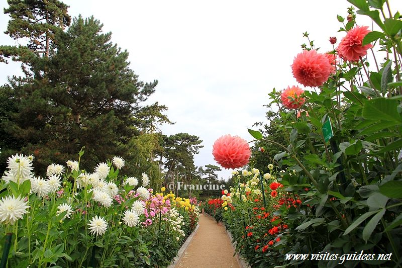 Concours international du Dahlia Parc floral Paris