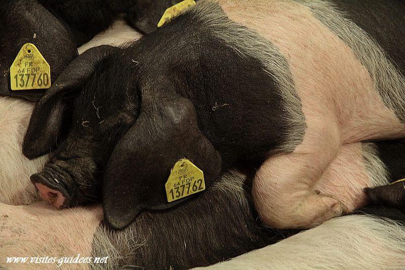 salon de l'agriculture village des cochons