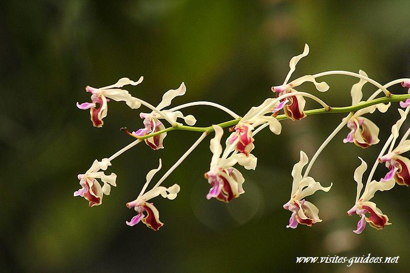 Mille et une orchidées Paris