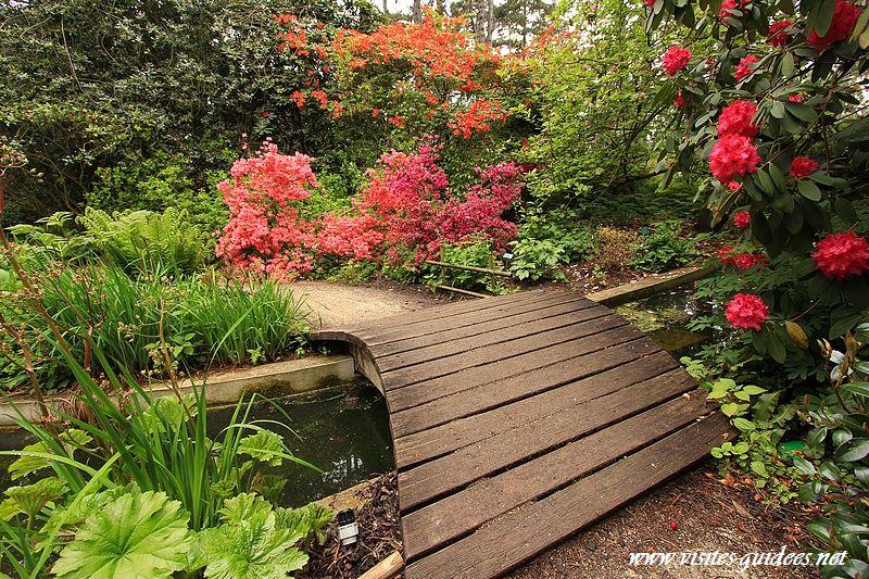 Parc floral de Paris rhododendrons  Visites guidées ~ Parc Floral Bois De Vincennes